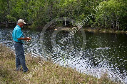 Man fishing in Everglades National Park with American Alligator in water, Florida.