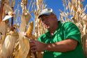 A farmer looks at a crop of feed corn in Canyon County, Idaho. MR
