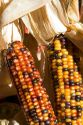 Indian corn on display at a roadside fruit stand in Fruitland, Idaho.